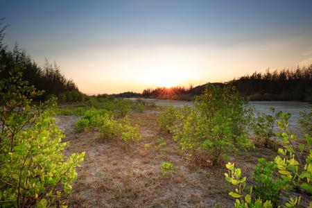 wasteland: sunset on seaside wasteland Wilderness Stock Photo
