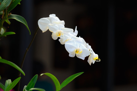 white orchids: white orchids in outdoor background Stock Photo