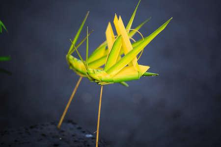 demijohn: wicker made of coconut leaves grasshopper