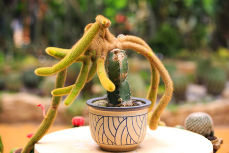 crowded space: Cactus Worms Stock Photo