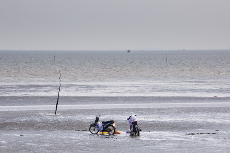 ensis: Cangio, Ho Chi Minh City, Vietnam - June 28, 2015 - Farmers are curious two motorcycle of catch clams, sea scallops Gio, HoChiMinh City, Vietnam