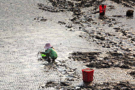 ensis: Cangio, Ho Chi Minh City, Vietnam - June 28, 2015 - a curious little girl go catch clams, sea scallops Gio, HoChiMinh City, Vietnam
