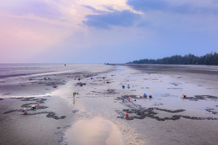 ensis: Cangio, Ho Chi Minh City, Vietnam - June 28, 2015 - Farmers are going groping the catch clams, sea scallops Gio, HoChiMinh City, Vietnam Editorial