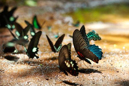The beautiful butterfly Da Ma National Park - Vietnam Foto de archivo