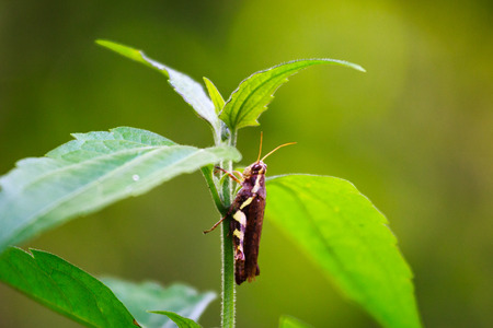 grasshoppers: Grasshoppers in Forest Park