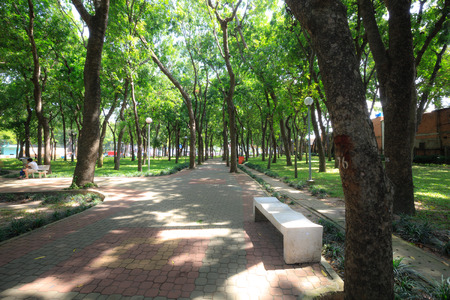 summer trees: Ho Chi Minh city, Viet nam - July 5, 2015: benches and walkway in a park in Ho Chi Minh City Editorial