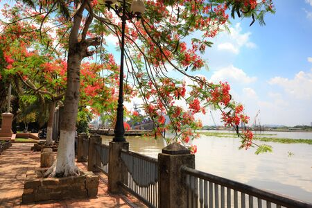 awaiting: Hochiminh City, Vietnam - June 7, 2015: In summer, red Poinciana have blossomed on the bank of Saigon River. Over there the ships Into the harbor awaiting Repaired
