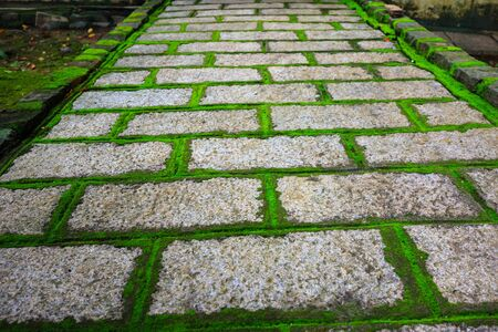 cobblestone road: Close-up of a cobblestone road in a park with grass and moss Growing Up Between the stones.