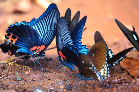 The beautiful butterfly Da Ma National Park - Vietnam Stock Photo