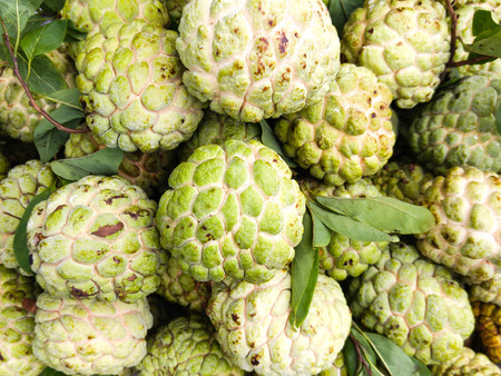 custard apples: Fresh and RIPE custard apples with green leafs for sale in Vietnam