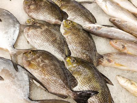 sold small: frozen sea fish print sold Supermarkets