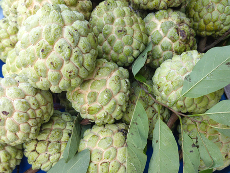 custard apple fruit: custard apple fruit sold fresh print market Stock Photo