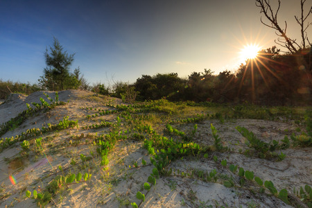 pan tropical: sunrise on the beach many vines