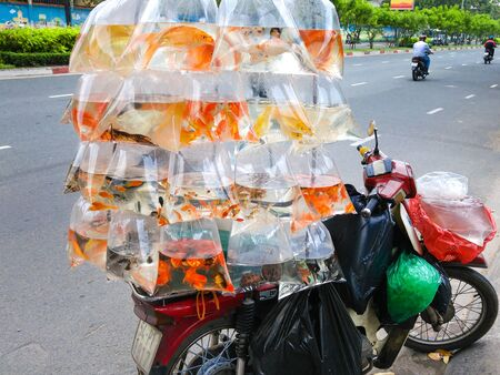 ornamental fish: Hochiminh City, Vietnam - October 14, 2015: ornamental fish swimming printed plastic bags, hanging on a motorcycle for sale on the street as an ornamental fish shop mobile, This is the livelihoods of the urban Poors