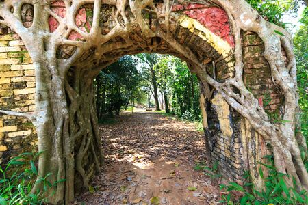 se cramponner: Bodhi tree roots cling to the door of the temple