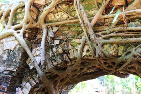 provenance: Bodhi tree roots cling to the door of the temple