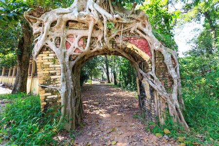 cling: Binh Duong province, Vietnam - October 25, 2015: Bodhi tree roots cling to the door of the old temple
