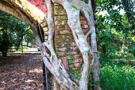 adhere: Bodhi tree roots cling to the door of the temple