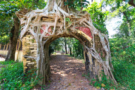 wicket gate: Bodhi tree roots cling to the door of the temple