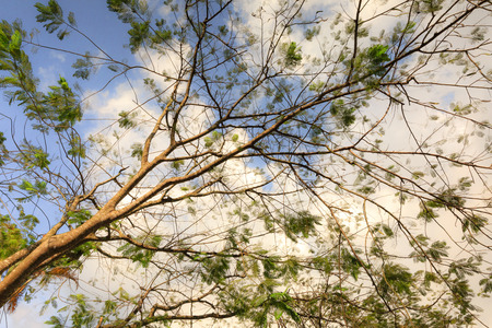 sun energy: green branches on the blue sky and white clouds Stock Photo