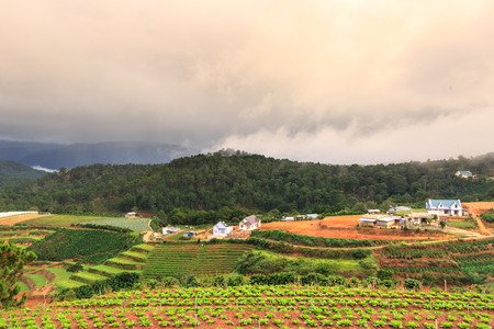 forcing: green vegetables grown in the mountains of Dalat, Vietnam Stock Photo