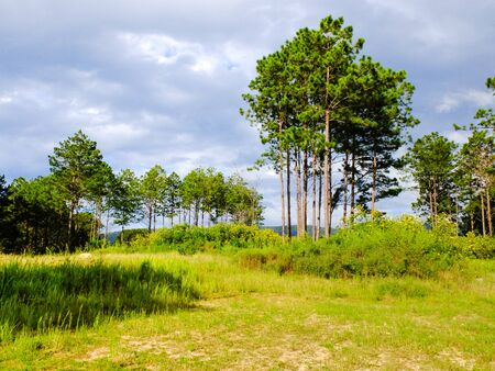 pinery: the pine forest and grassland