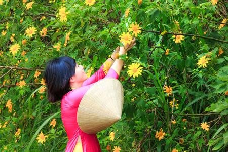 conical hat: Lam Dong Province, Vietnam - November 7, 2015: in the dry season, wild sunflowers bloom everywhere on the plateau. after working, a woman walks through a field full of wild sunflowers home