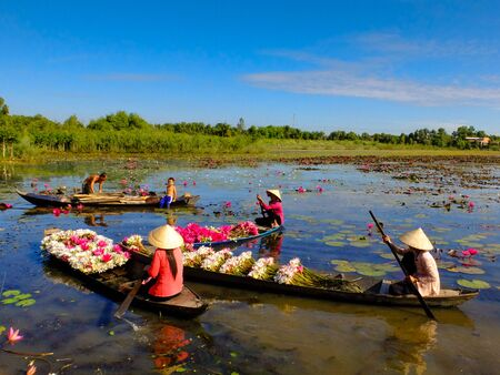 green flower: Moc Hoa District, Long An Province, Vietnam - November 22, 2015: people boating on lakes harvest water lilies, The People of this region used as a vegetable by water lilies dish