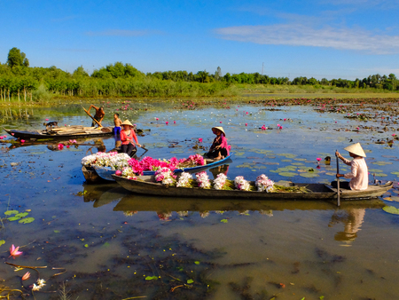 picks: Moc Hoa District, Long An Province, Vietnam - November 22, 2015: people boating on lakes harvest water lilies, The People of this region used as a vegetable by water lilies dish