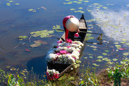 picks: Moc Hoa District, Long An Province, Vietnam - November 22, 2015: in the flooding season there are a lot of water lilies on the lakes rise, People boating on lakes harvest water lilies, The People of this region so as a used water lilies vegetable dish Editorial