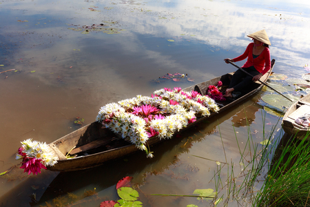 picks: Moc Hoa District, Long An Province, Vietnam - November 22, 2015: Harvest lilies. After harvesting water lilies, the woman carry flowers home by boat on the canal. The People of this region used as a vegetable dish lilies by Editorial