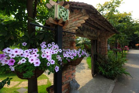hanging basket: Gate garden petunia hanging basket on the wood railing in the
