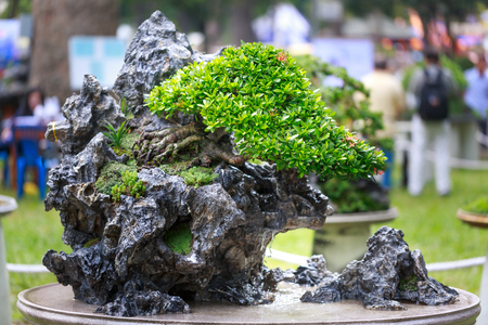 foliage tree: bonsai tree in garden
