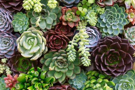 Miniature succulent plants Foto de archivo