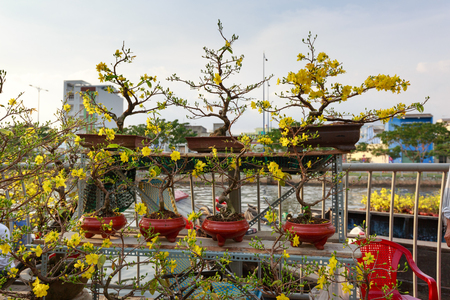 yelow: yelow apricot bonsai pots for sell at flower market Stock Photo