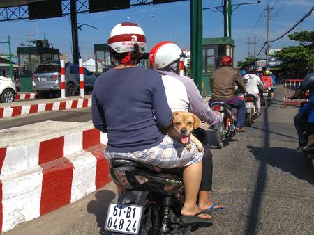 mot: Binh Duong province, Vietnam -  February 06, 2016 : A pet dog lying on the motorcycle between two women riding on a street in the town of Thu Dau Mot, Binh Duong province, Vietnam Editorial