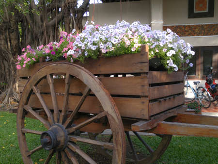 plantlife: Cart with flowers in garden