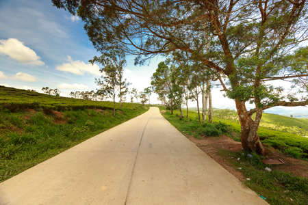 dalat: Concrete road going through the tea fields. green farm of Da lat, Viet Nam nature