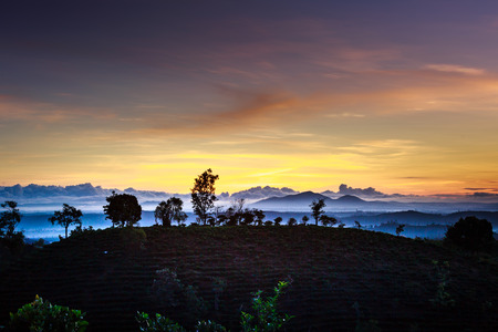 loc: fog covered up the trees on the hill at sunrise in area mountain God of Bao Loc town, Lam Dong Province, Vietnam
