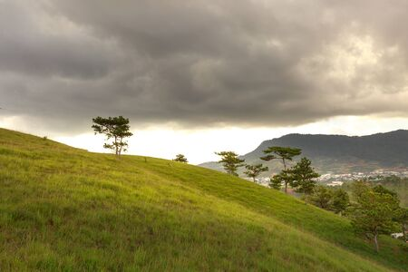 cloudy day: Sloping meadows with Lonely tree on the hill at beautiful landscape on cloudy day in summer