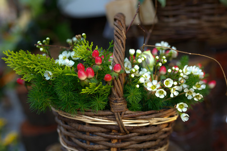 Basket with chamomile flowers