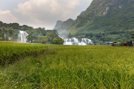 Rice fields at near Ban Gioc waterfalls ,Cao Bang ,Viet Nam . its a famous location for travel Stock Photo