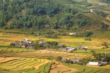 Terraced rice field in Mu Cang Chai, Yen Bai province in Vietnam. A very nice view of ripe rice in the high mountain terraced fields in northwestern Vietnam. ready for big harvesting