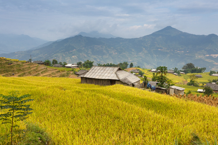 ha giang: terraced rice fields in Hoang Su Phi in Ha Giang province in Vietnam. Ripe rice in the high mountain terraced fields in northwestern Vietnam. ready for big harvesting Stock Photo