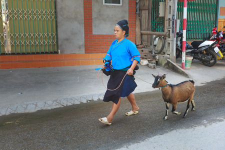 2 way: Hoang Su Phi, Ha Giang province, Vietnam - October 2, 2016 : ethnic minority people lead their goats on the way to the village of Hoang Su Phi Market Sundays for sale