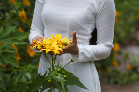 loc: Bao Loc, Lam Dong Province, Vietnam - November 5, 2016 : young girl holding some of freshly picked wild sunflowers from the bushes of wild sunflower bloom in yellow, colorful scene