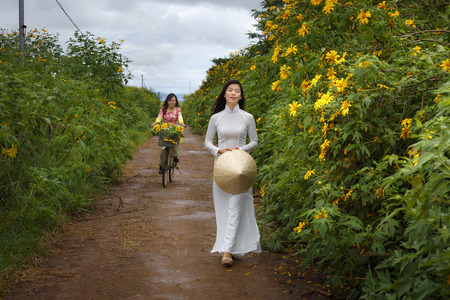 loc: Bao Loc, Lam Dong Province, Vietnam - November 5, 2016 : Two girls walking on path of countryside between the bushes of wild sunflower bloom in yellow, colorful scene