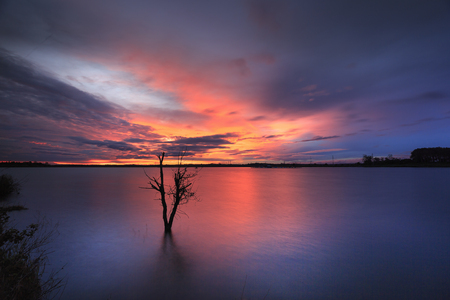 magic scene in the sunset on the wild lake with lonely dry trees. This picture was taken by long exposure technic.