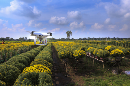 village Sa Dec, Dong Thap province, Vietnam - January 13, 2017: drones and yellow daisy field at Sa Dec flower village. ready for harvest for sale on Tet holiday in Vietnam