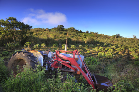 loc: Bao Loc town, Lam Dong Province, Vietnam - February 28, 2017 : red multi-function tractor in a field of coffee plantation in Bao Loc town, Lam Dong province, Vietnam. Editorial